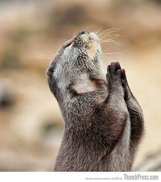 Lieber Gott, bitte lass Frieden, Liebe und Harmonie auf der ganzen Welt sein. Danke! ;-) otter prays!!
