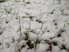 Schnee auf der Wieso, so kanns gehen im #April #Aprilwetter #Frühling