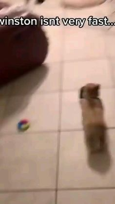Super Cute Puppies, Cute Baby Dogs, Cute Funny Babies, Cute Dogs And Puppies, Cute Wild Animals, Cute Little Animals, Cute Funny Animals, Funny Videos Clean, Funny Animal Videos