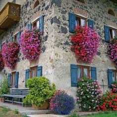 Buy Colorful Geranium Flowers Garden Potted Perennial Seed Beautiful Pelargonium Indoor Plants Seeds Geraniums Randomly Mix Colour of Goods Potted at Wish - Shopping Made Fun Window Box Flowers, Window Boxes, Flower Boxes, Flower Baskets, Hanging Flowers, Hanging Plants, Garden Windows, Balcony Garden, House Windows