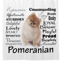 Cute Puppies, Cute Dogs, Dogs And Puppies, Doggies, I Love Dogs, Puppy Love, Cute Pomeranian, Pomeranian Haircut, Pomeranian Facts