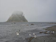 Cape Alava In Washington