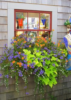 Nantucket window box filled with sweet potato vine, scaevola, orange trailing petunias and bacopa against gray shingle siding. Diy Hanging, Hanging Plants, Window Plants, Landscaping With Rocks, Backyard Landscaping, Small Front Yard Landscaping, Backyard Retreat, Backyard Patio, Potato Vine Planters