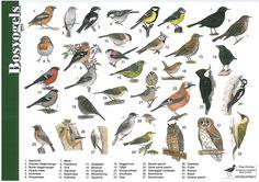Herkenningskaart Bosvogels | Landschap Noord-Holland