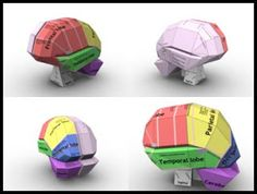 "how to make the inside brain model  | The Brain"" Papercraft ~ Paperkraft.net - Free Papercraft, Paper Model ..."