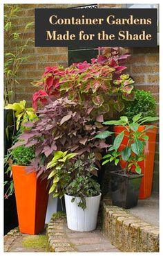 Do you have a shaded corner in your garden or patio that you want to brighten up? These containers will add color and light! Featuring shade-loving plants like ferns, hostas, hellebores, begonias, and more. Potted Plants For Shade, Best Plants For Shade, Shade Garden Plants, Patio Plants, Garden Pots, Container Plants, Container Gardening, Gardening Tips, Back Gardens