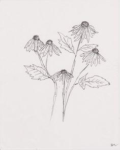 Black Eyed Susans Ink Drawing 8 x 10 Original by WhenAngelsDraw, $30.00