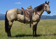 the saddle on an Andalusian breed Cute Horses, Pretty Horses, Horse Love, Beautiful Horses, Animals Beautiful, Quarter Horses For Sale, Roping Horses For Sale, Buckskin Horses For Sale, Reining Horses