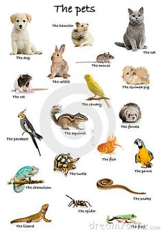 Collage of pets and animals in English in front of white background, studio shot Poster English Tips, English Study, English Words, English Lessons, English Grammar, Learn English, English Language Learning, French Language, Teaching English