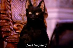 salem saberhagen sabrina the teenage witch town of salem salem witch trials black cat Cat Memes, Funny Memes, Hilarious, Funny Quotes, Salem Sabrina, Sabrina Cat, Reaction Pictures, Funny Pictures, Salem Cat