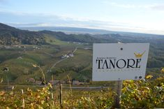 At Tanorè winery in the heart of wine region