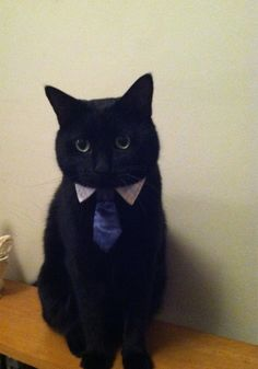 Business casual black cat