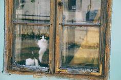 Cat in the Window photo by Aleksandar Popovski (@popovski) on Unsplash