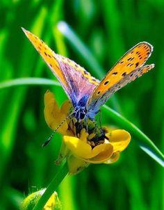 The Amazing Beauty of Butterfly Wings...........  BrandiElsie