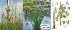 Byliny - Bylinky pro všechny Glass Vase, Plants, Plant, Planets