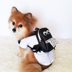 Dog Leather backpack with poop bags dogs harness vest puppy Cute Leather Backpacks, Diy Dog Crate, Dog Backpack, Puppy Care, Baby Puppies, Dog Harness, Pet Clothes, Dog Accessories, Dog Supplies