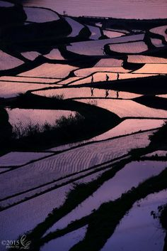 Sunset over terraced paddy fields in Japan
