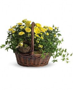 Yellow Trio Basket Plants & Little Bird & Nest  LOVE THIS !!!!!!!
