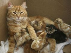 This mama cat has an interesting brood, and they've even got the same colouring !!