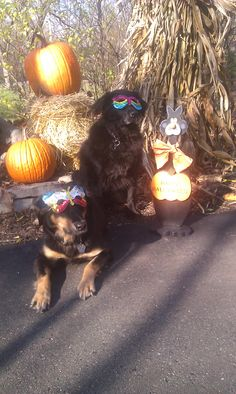 Me and my sister, Sparky ready for Halloween.