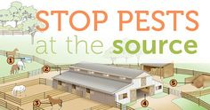 Tired of endlessly spraying for flies? Sick of choking on chemical repellents? Prevent pests from becoming a problem in the first place! We've got four simple ways you can ensure your horses are fly-free all season long at http://blog.smartpakequine.com/2013/03/stop-pests-at-the-source/.