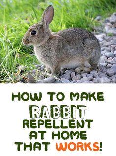 Rabbit Repellent, Japanese Beetles, Family Garden, Pet Safe, Garden Inspiration, Rabbits, The Great Outdoors, Garden Design, It Works