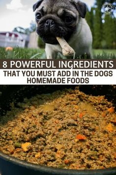 8 Powerful Ingredients That You Must Add in Homemade Dog Foods Human Food For Dogs, Make Dog Food, Best Dog Food, Best Homemade Dog Food, Homemade Dog Treats, Healthy Dog Treats, Pet Food, Healthy Foods, Stay Healthy