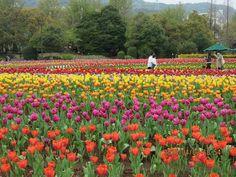 Nagasaki Kyuushu Japan, trip Beautiful Tulip's