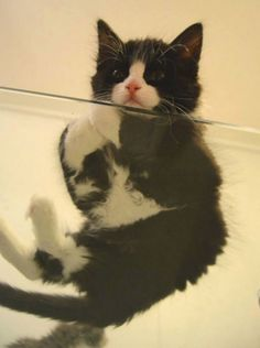 It's all a matter of purrrspective!