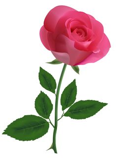 Pink Rose Clipart PNG Image
