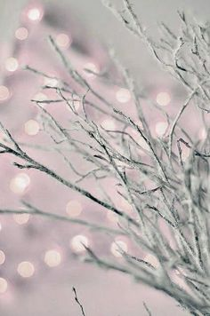 Pink and Gray Bokeh
