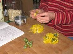 """Dandelion Flower Cookies : """"It's not only fun to gather and use dandelion flowers in your cooking, they offer health benefits as well.  The blossoms are good for your heart.  When steeped as a tea, Susun Weed recommends them for headaches, menstrual cramps, backaches, stomach aches, and even depression."""""""