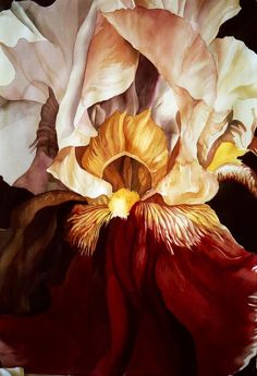 Red And White Iris Painting by Alfred Ng Acrylic Flowers, Watercolor Flowers, Watercolor Paintings, Realistic Paintings, Watercolours, Iris Painting, Silk Painting, Botanical Tattoo, Botanical Art