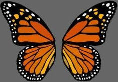 Best Tattoo Butterfly Wings Stained Glass Ideas You are in the right place about tattoo quotes itali Butterfly Wing Tattoo, Butterfly Wings Costume, Butterfly Drawing, Butterfly Tattoo Designs, Glass Butterfly, Butterfly Painting, Butterfly Crafts, Monarch Butterfly, Butterfly Wing Pattern