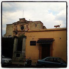 Dog on roof Dogs, Instagram, Oaxaca, Pet Dogs, Doggies