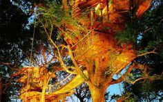 Ağaçları kesmeyi reddeden 22 mimar