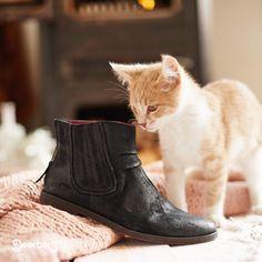 Von Natur aus neugierig: Katzen würden Kickers kaufen ;-) #kickers #katzen #neugierig #fotoshooting