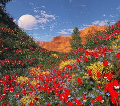 Valley of the Spanish Broom by Litterboy on deviantART