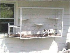 """Creative """"Catio"""" enclosures keep cats safe in their yards Don't have a patio? Even small spaces can afford a cat some safe outdoor time. These cats walk right out the window onto a small cat terrace. Cat Run, Cat Walk, Cage Chat, Outdoor Cat Enclosure, Cat Cages, Outdoor Cats, Small Cat, Animal Projects, Cat Furniture"""