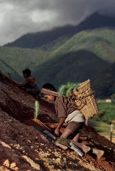 politics-war:    In the least developed countries, 30 percent of all children are engaged in child labor. Nepal, 1983.
