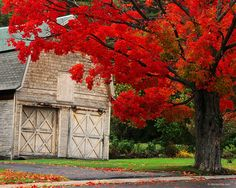 Red Tree Fall Color Autumn Leaves Old Barn All Hd Wallpaper, Desktop Wallpapers, Leaves Wallpaper, Wallpaper Pictures, Wallpaper Ideas, Country Barns, Old Barns, Country Living, Country Life