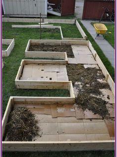 wanted a layered, or 'lasagna' garden, and began with cardboard mulch to kill his lawn. After that--a layer of straw/manureNorm wanted a layered, or 'lasagna' garden, and began with cardboard mulch to kill his lawn. After that--a layer of straw/manure Backyard Vegetable Gardens, Veg Garden, Garden Types, Garden Farm, Rockery Garden, Raised Vegetable Garden Beds, Home Vegetable Garden Design, Garden Mulch, Urban Garden Design