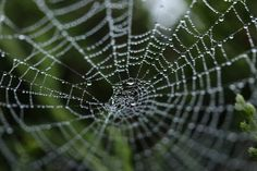Eco-friendly artificial spider silk mimics one of nature's strongest materials Spider web silk