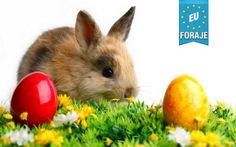 Easter Bunny Images, Easter Bunny Pictures : Today here we are going to share some best Free Easter Images and Easter Pics 2016 with you. Easter Bunny Images, Happy Easter Bunny, Easter Pictures, Logo Video, Ostern Wallpaper, Rabbit Wallpaper, Hd Wallpaper, Gb Bilder, Egg Hunt
