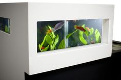 Archiquarium. A Modern Swedish Fish Tank By Karl-Oskar Ankarberg. - if it's hip, it's here