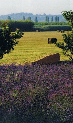 Le Mas de Baraquet, and it's grounds, near St- Rémy de Provence.