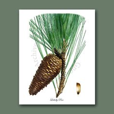 Pine Cone Decor Wall Hanging Conifers by GnosisPictureArchive