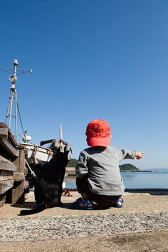 Cat Heaven Island in Japan - Imgur