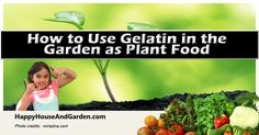 How to Use Gelatin in the Garden as Plant Food.  Read this informative article over at Happy House and Garden.  Click the link or image to learn more!