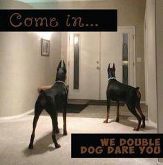 majestic #Doberman #dog